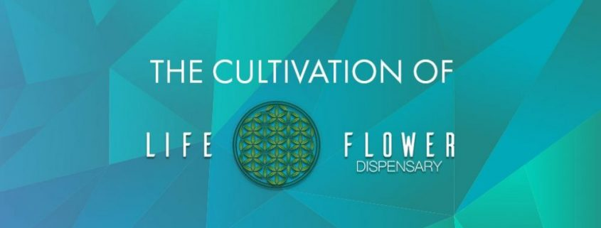 The Cultivation of Life Flower Dispensary in Denver